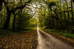Autumn Lane 4