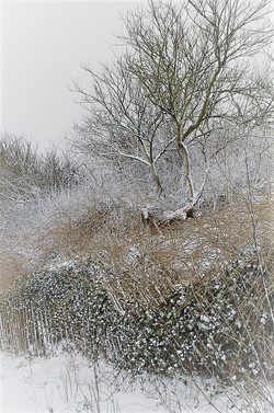 Acre Gap in Winter