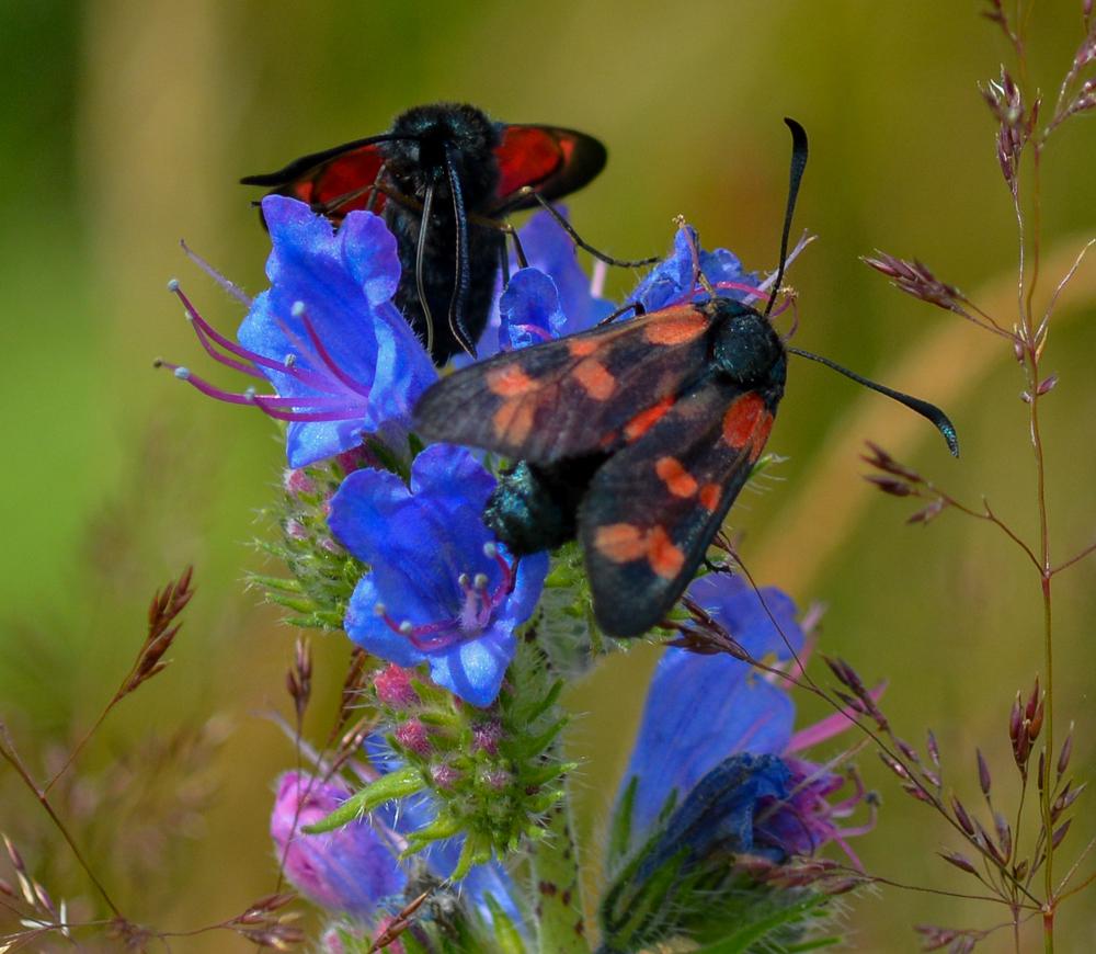 Moths 15