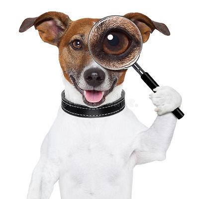 perro-con-la-lupa-28220368.jpg
