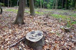 Face-Forest--11.jpg