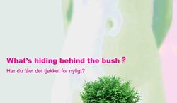 Behind-the-bush.jpg
