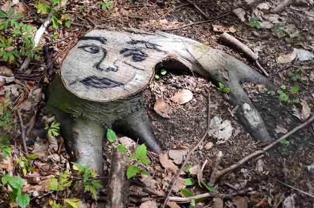 Face-Forest--12-B.jpg