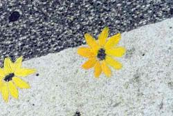 Flower-Power-3.jpg