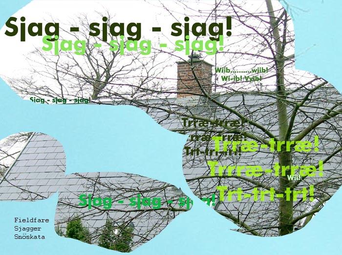 Sjagger+700+pix.jpg