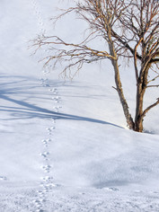 """""""Tracks in the Snow"""""""
