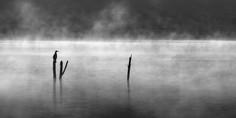 """Wivenhoe Backwater"""