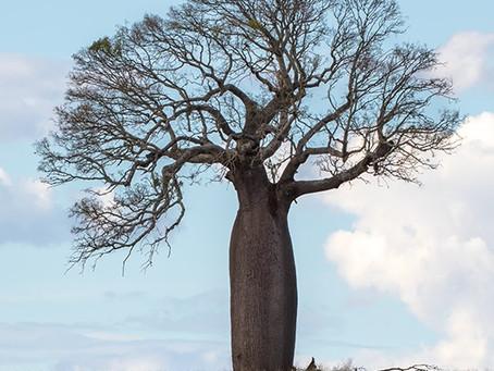 The Bottle Tree Blog