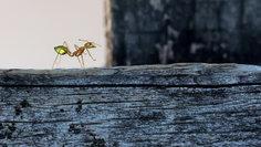 """Green Ant Prance"""