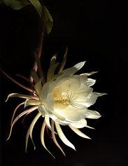 """""""Night Cactus"""""""