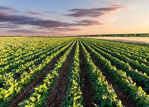 Rows of Crops.jpg