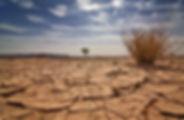 Drought Cracked Earth (2).jpg
