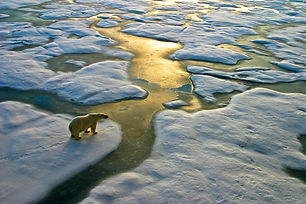 Polar bear ice (1).jpg