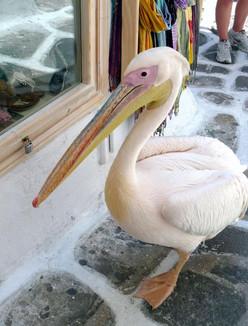 Mykonos pelican