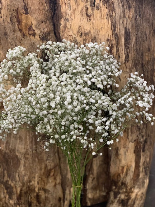 Imported Gypsophila