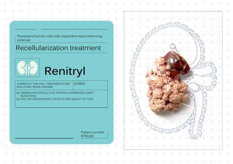 Packaged kidney organoid