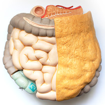 Intestine organoid on original organ.jpg