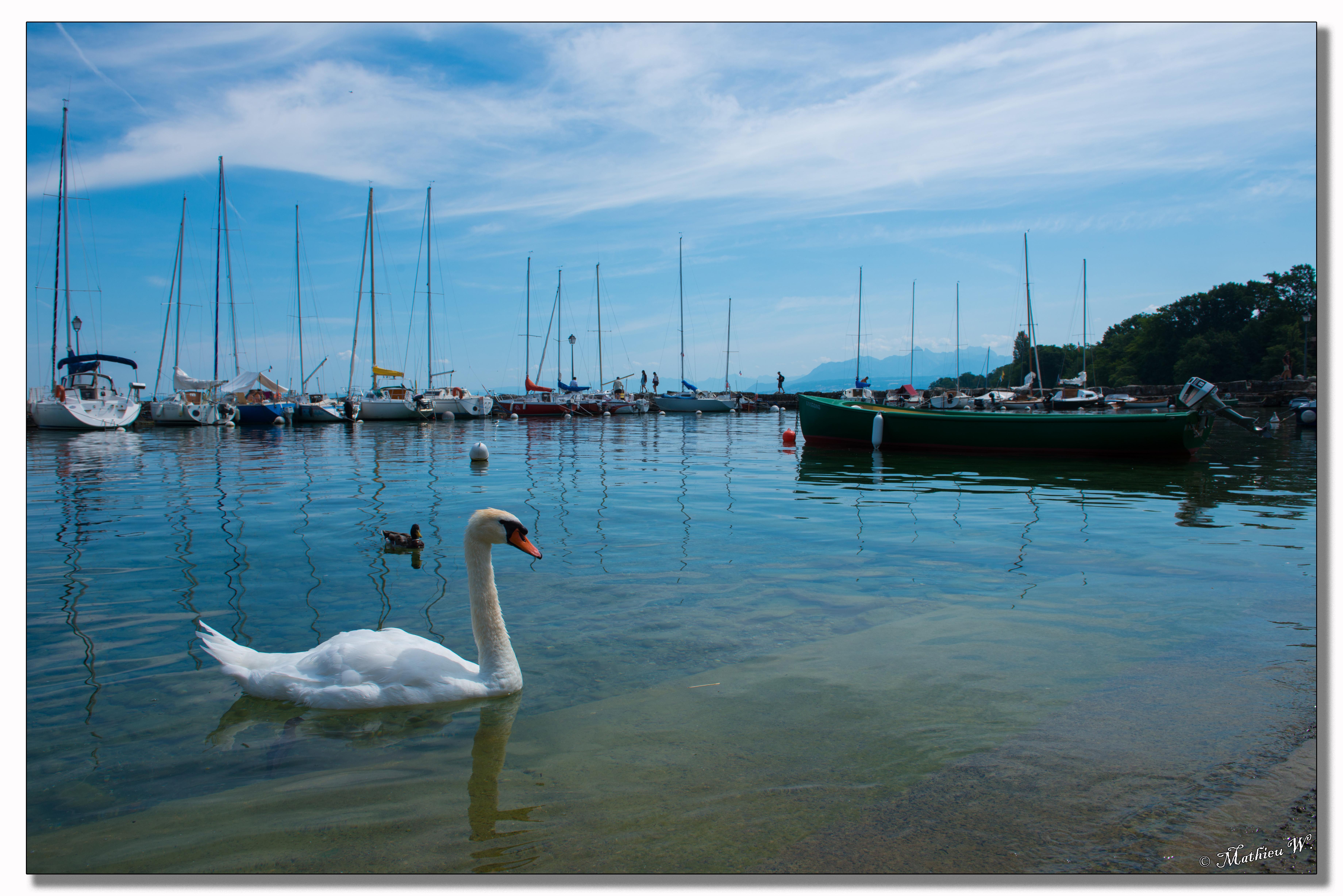2015-07 WE au lac Leman (61)