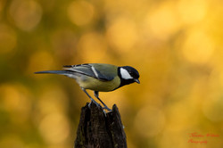 2019-11-30 Oiseaux chez Guy (6)
