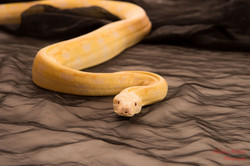 2018-03-31 Fanny 34 eme -Yannick - serpents (228)