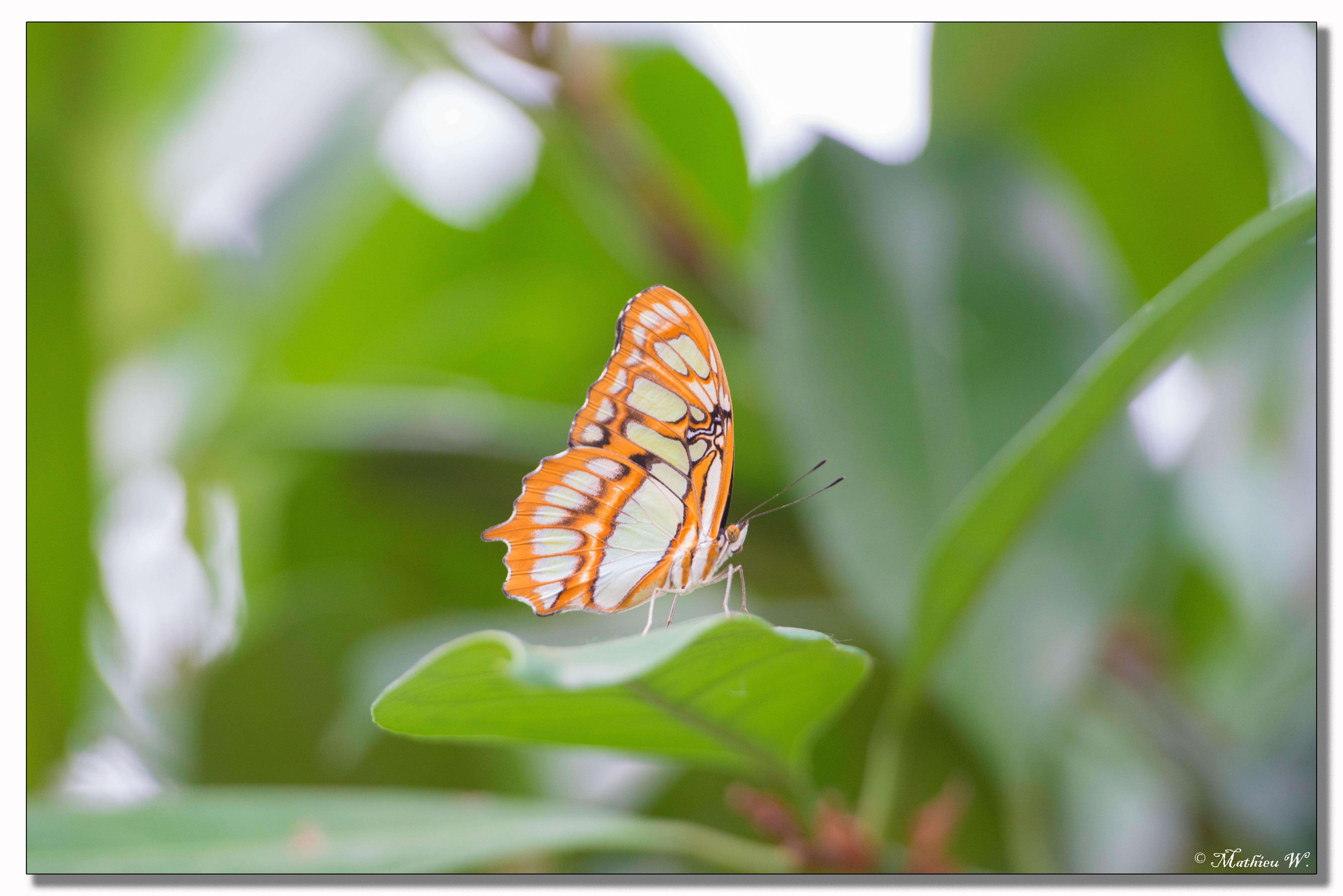 2014-05-24 Hunawihr - jardin des papillons (19)