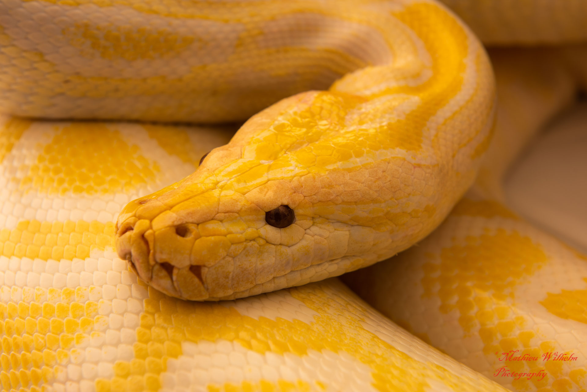 2020-03-15 serpents fond Blanc (274)