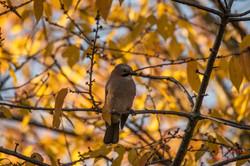 2019-11-30 Oiseaux chez Guy (28)