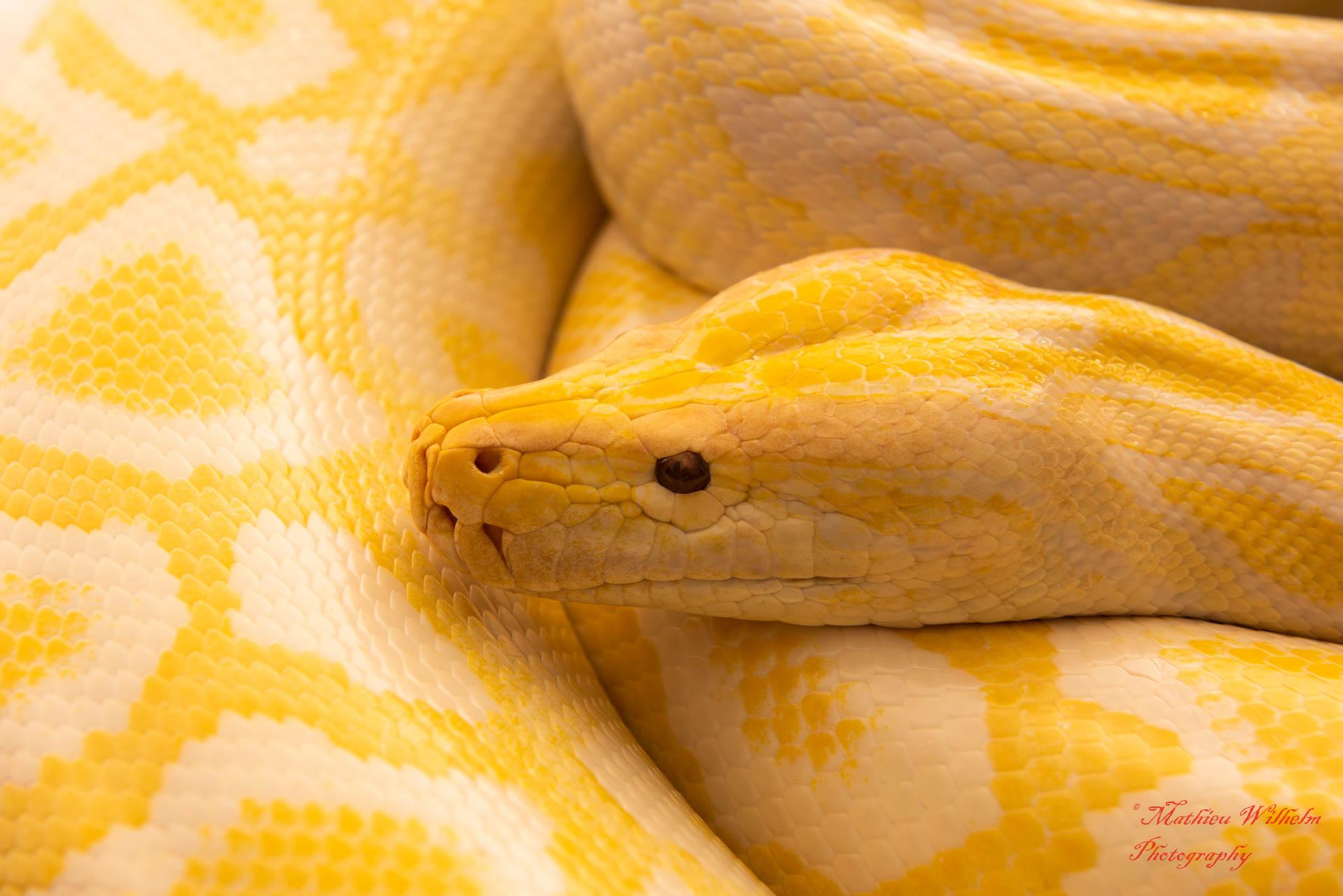 2020-03-15 serpents fond Blanc (271)