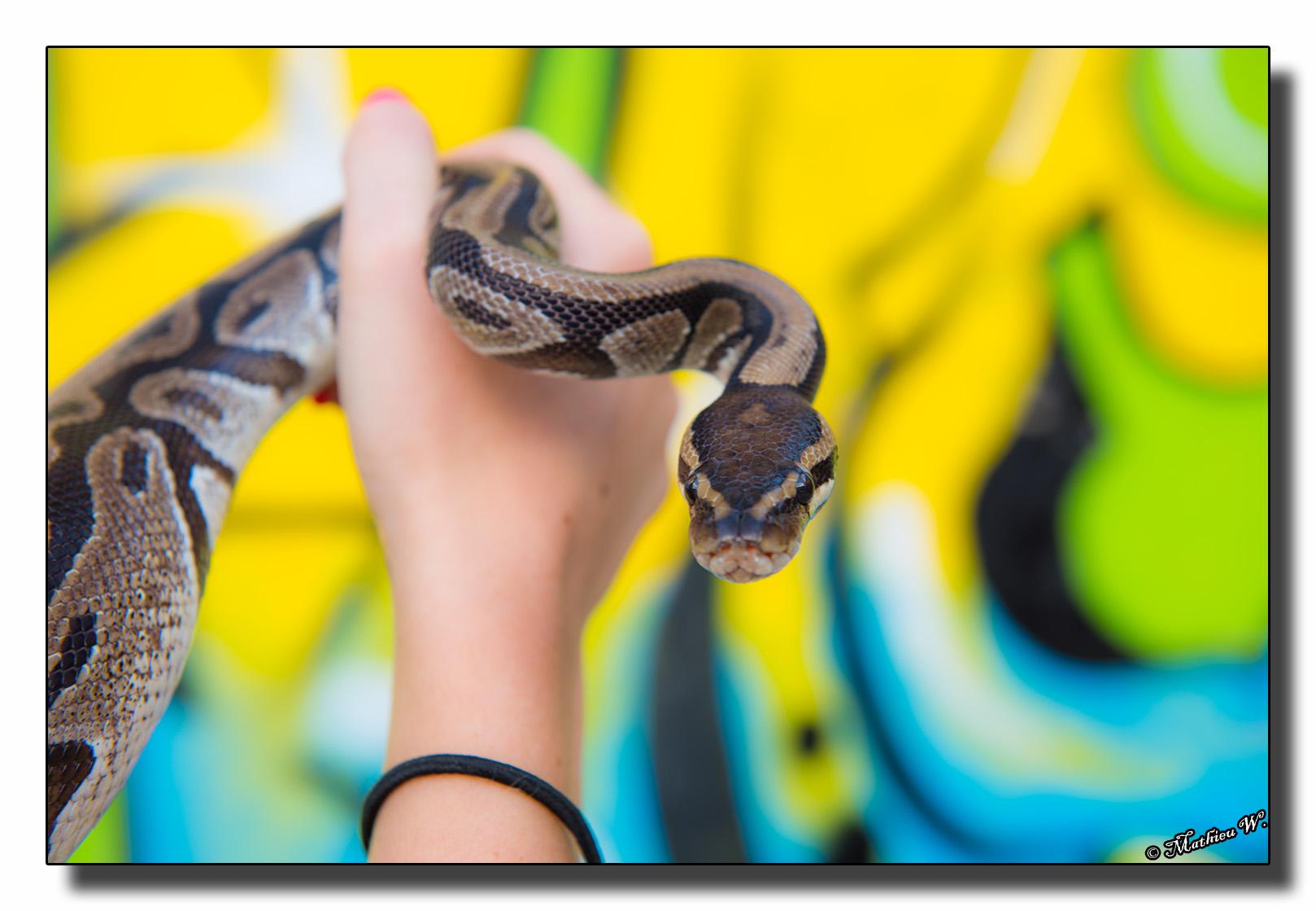 2016-07-26 Aurelie Camusso 15eme Serpents exterieur (345)