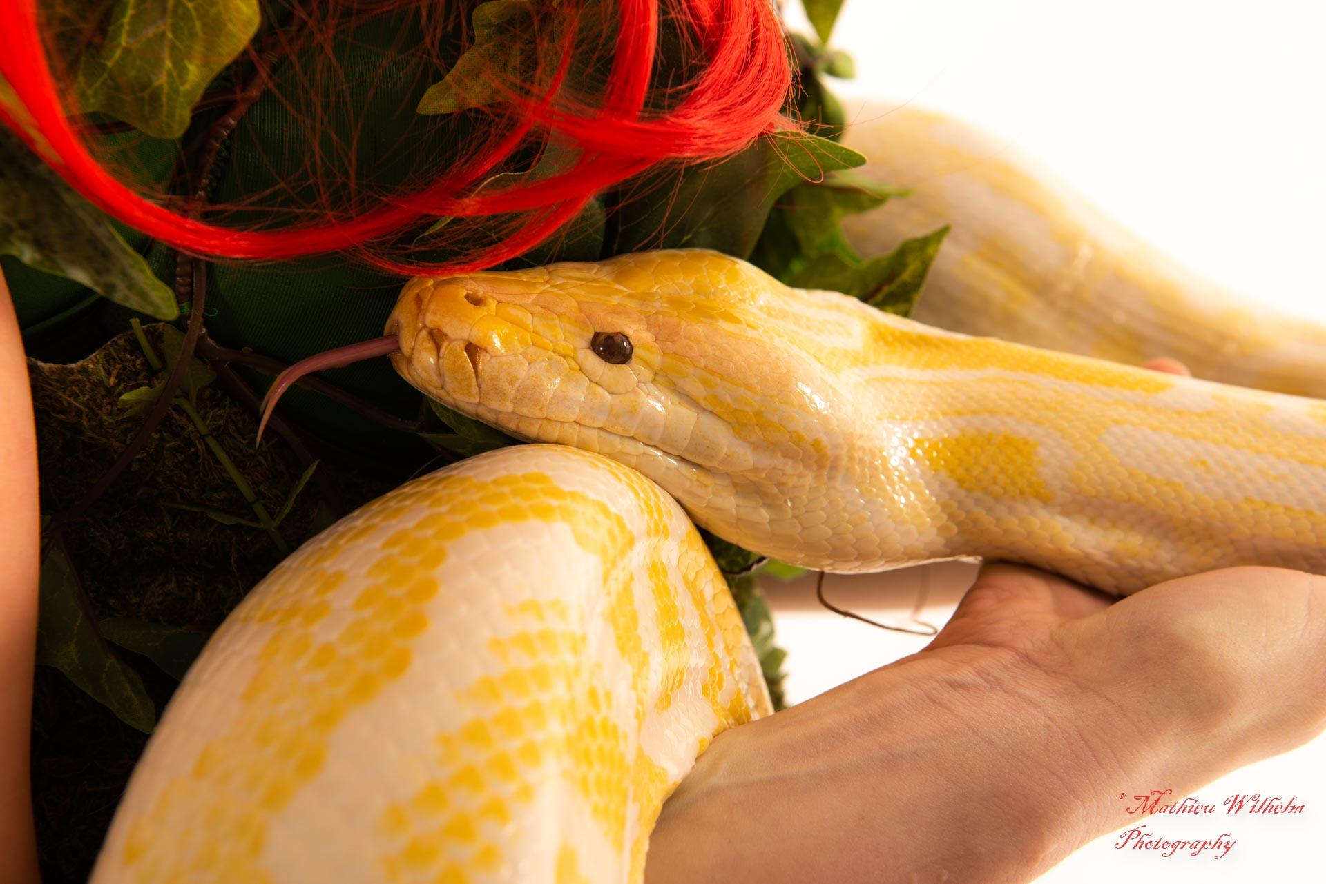 2020-03-15 serpents fond Blanc (58)