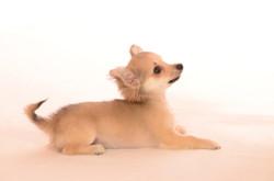 2012-07-17 Marylou -- Klara - Karen & les chiens (121)