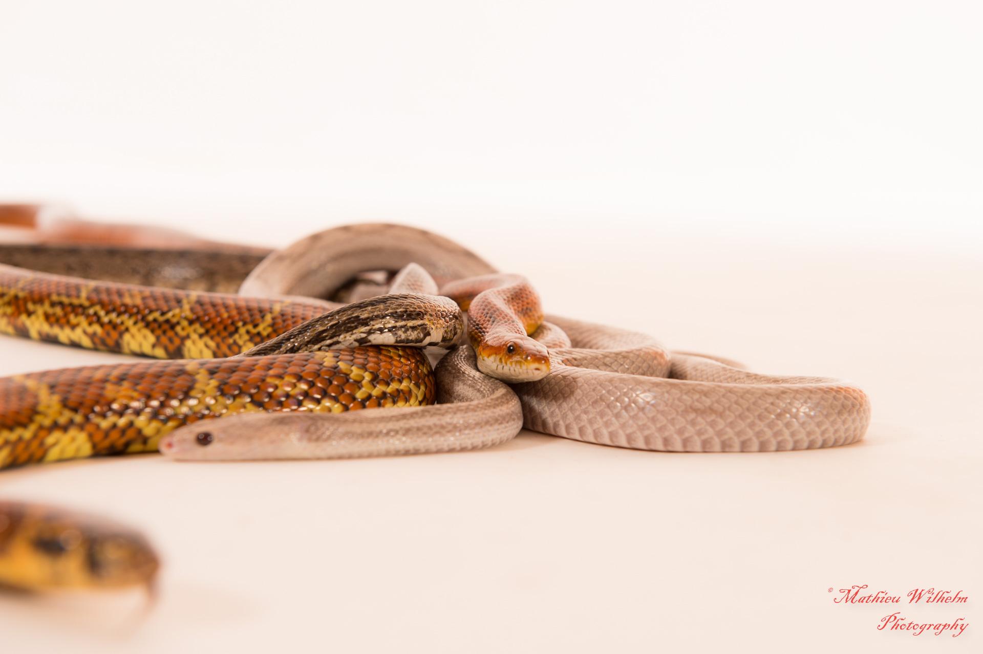 2018-03-31 Fanny 34 eme -Yannick - serpents (97)