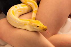 2020-03-15 serpents fond Blanc (220)