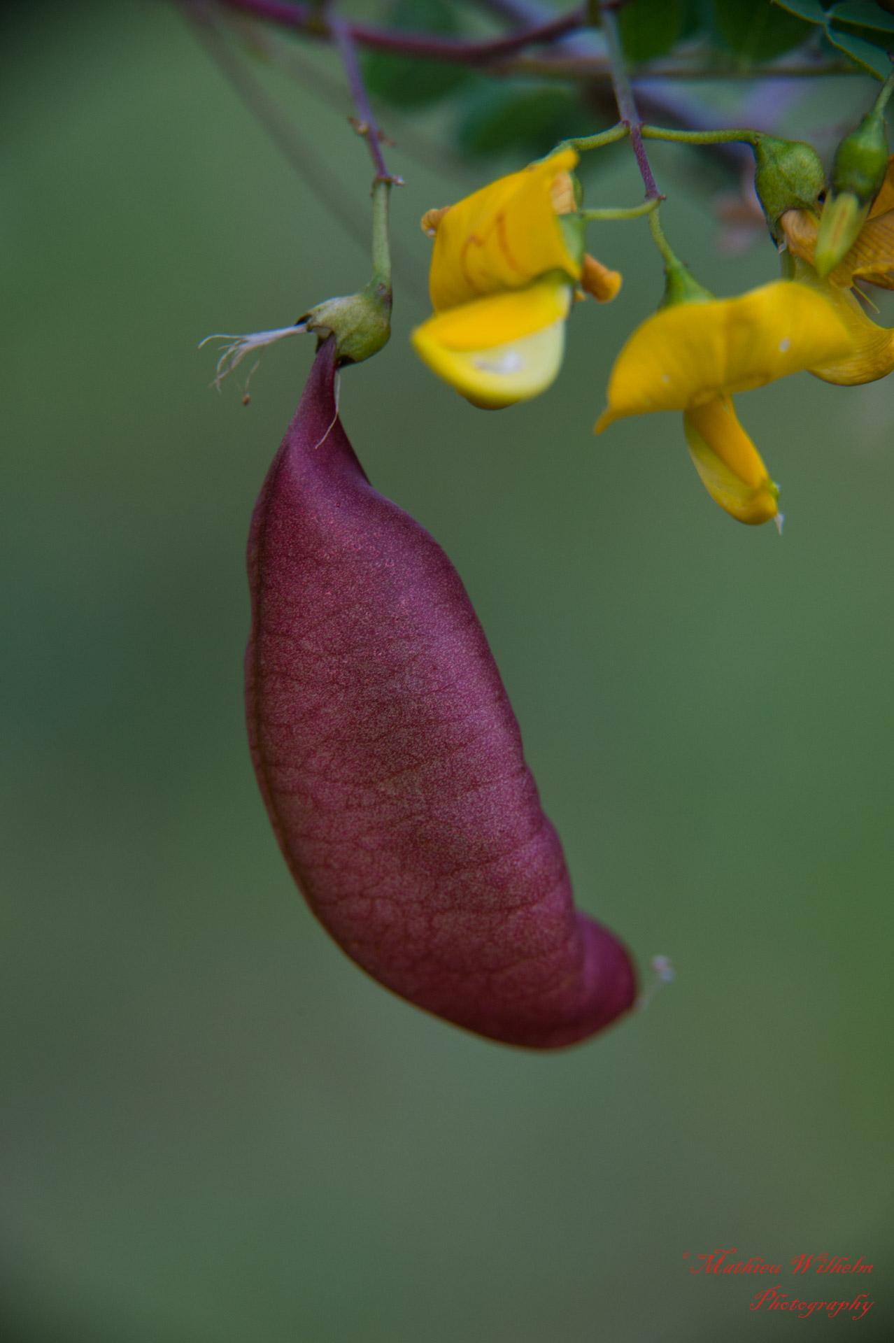 2018-05-30 orchidé bollenberg (17)