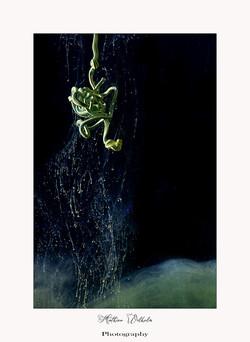 2021-05-12 peinture dans l'eau (13)