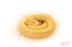 2020-03-15 serpents fond Blanc (268)