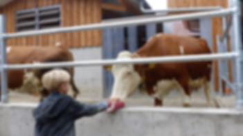 Kinderbauernhof Storchenhaeusle -  Hofbi