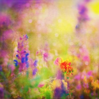 Summer Background. Flowers. Spring Backg