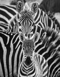 Monochrome-Here's Looking At You!