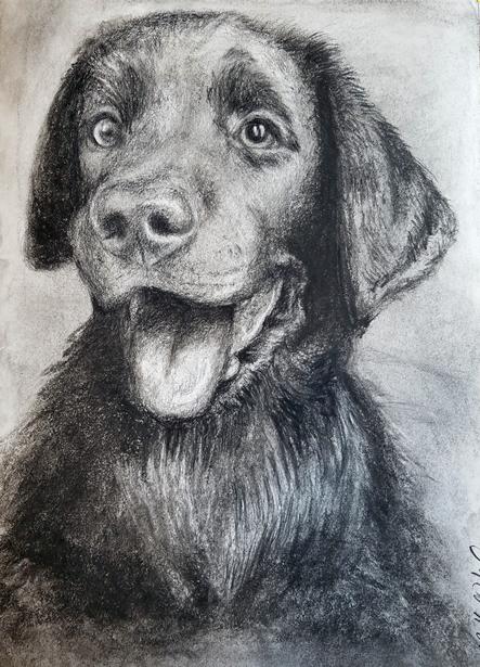 Charcoal Dog
