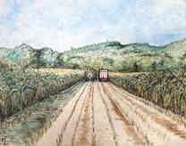 Farm Series #3