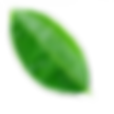 leaf 10.png