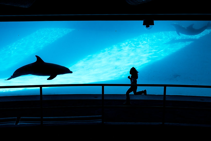 10101010_dolphins_02.jpg