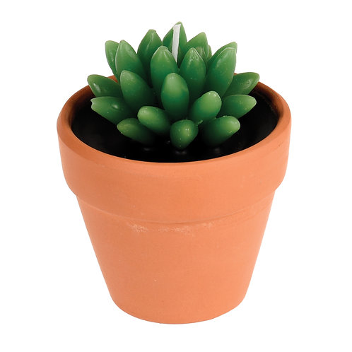 Cactus Candle in a Pot