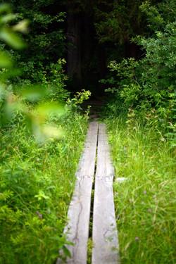 The Appalachian Trail in NJ