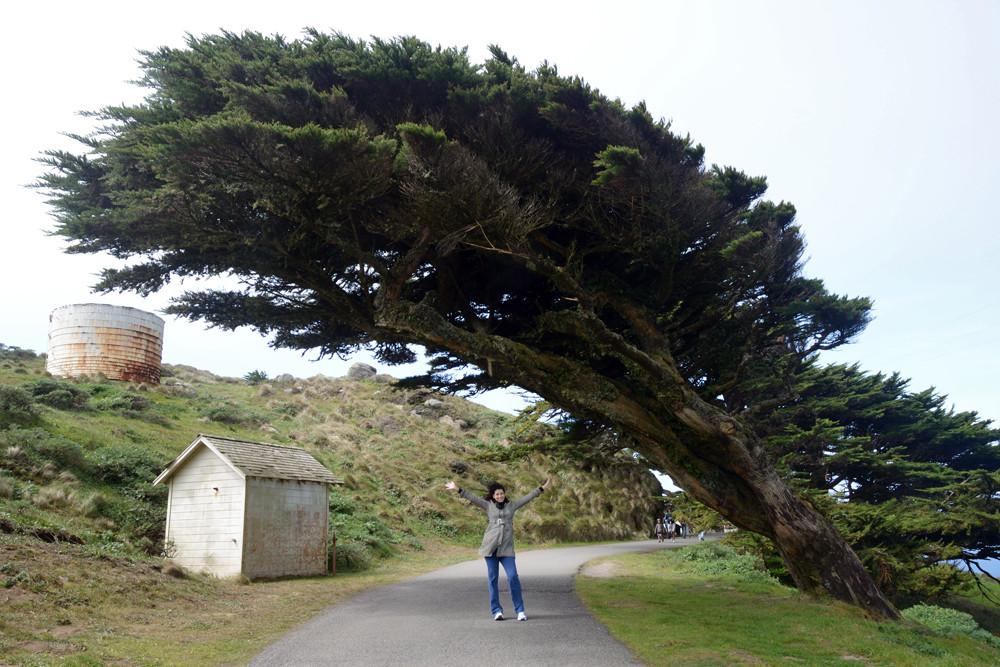 unboring-exploring-point-reyes-national-seashore-cypress-trees