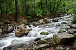 Pine Meadow Creek