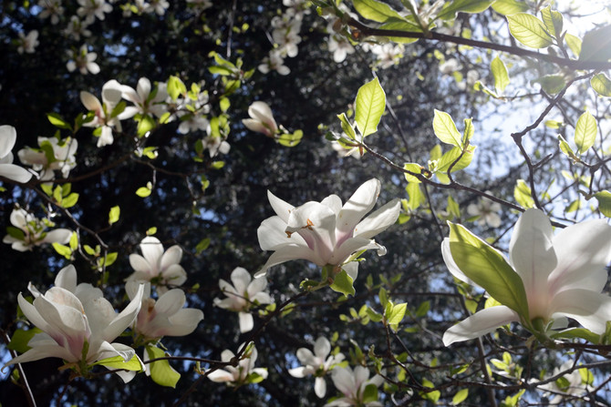BOOMING blooms at the New Jersey Botanical Garden