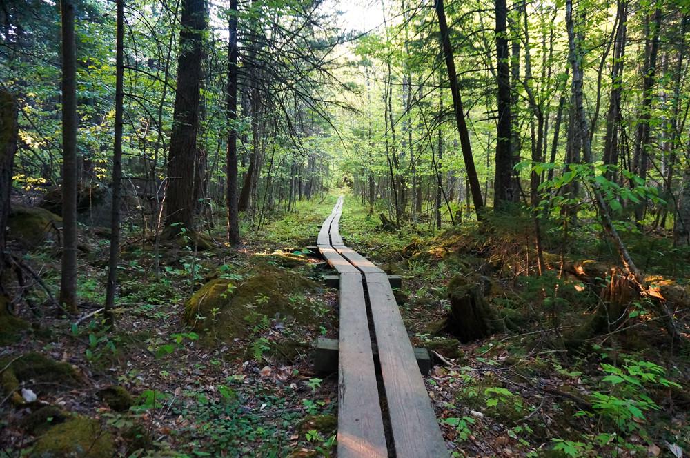 boardwalk-trail-new-york-state-ADKs