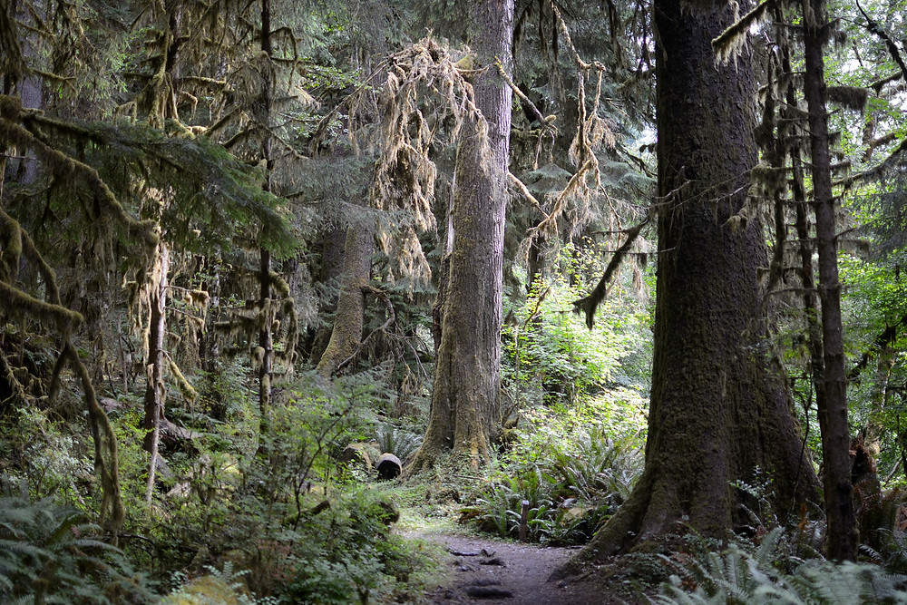 hoh-rainforest-olympic-national-park-wa